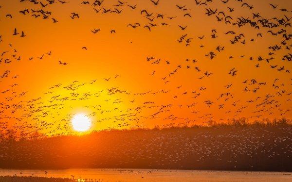 Animal Bird Birds Sky Sun Sunset Flock Of Birds HD Wallpaper | Background Image