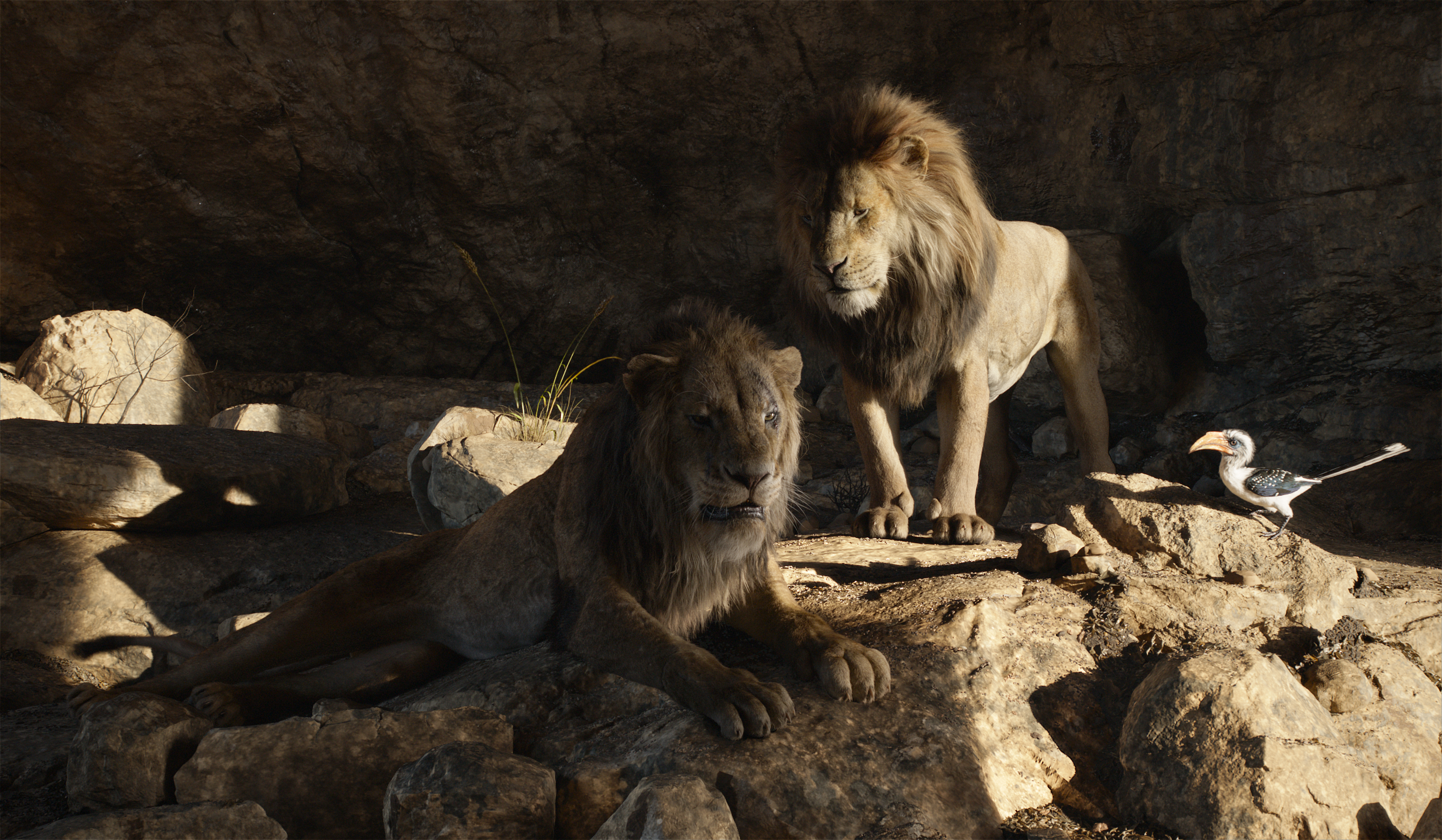 The Lion King 2019 4k Ultra Hd Wallpaper Background