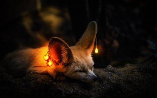 Photography Manipulation Light Bulb Sleeping Fennec Fox Wildlife HD Wallpaper | Background Image