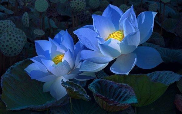 Earth Lotus Flowers Flower Blue Flower HD Wallpaper | Background Image