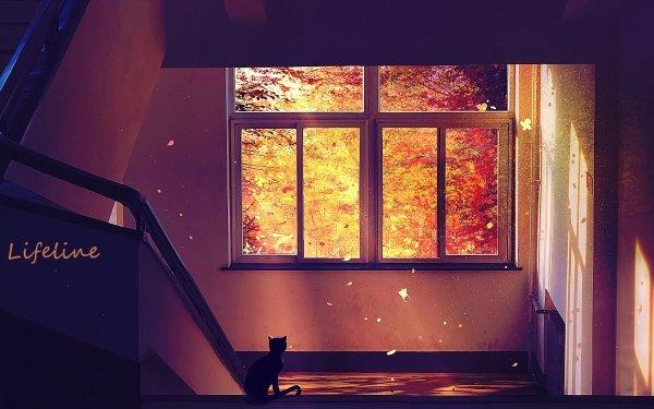 Anime Original Cat Fall HD Wallpaper | Background Image