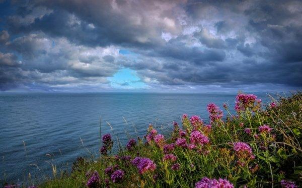 Earth Ocean Flower Cloud Nature Pink Flower Horizon HD Wallpaper | Background Image
