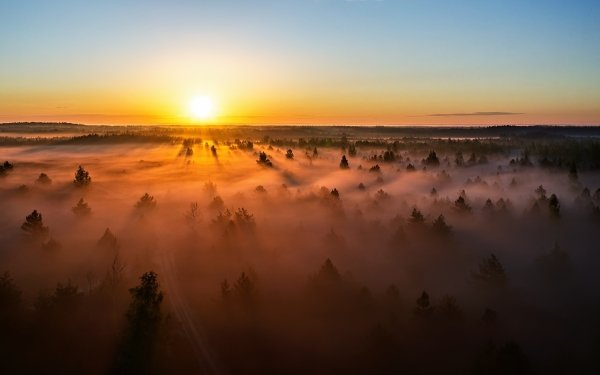 Earth Fog Lithuania Sunset Forest Nature Horizon HD Wallpaper | Background Image