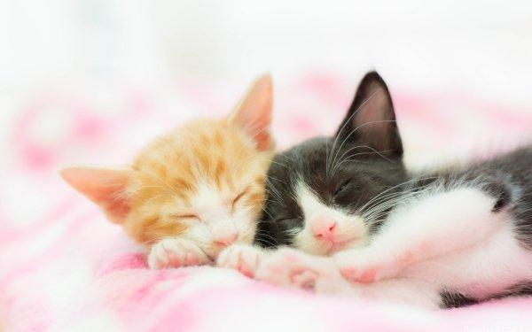 Animal Cat Cats Kitten Cuddle HD Wallpaper | Background Image
