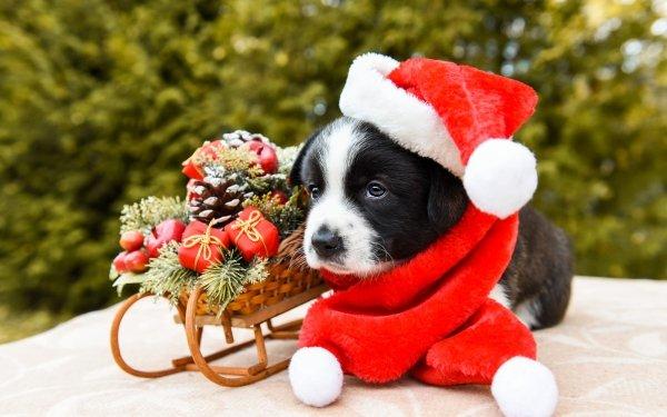 Animal Puppy Dogs Dog Baby Animal Christmas Sled Santa Hat HD Wallpaper   Background Image