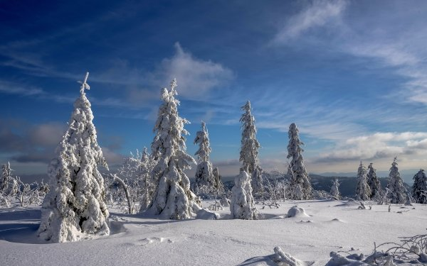 Earth Winter Nature Snow Tree HD Wallpaper | Background Image