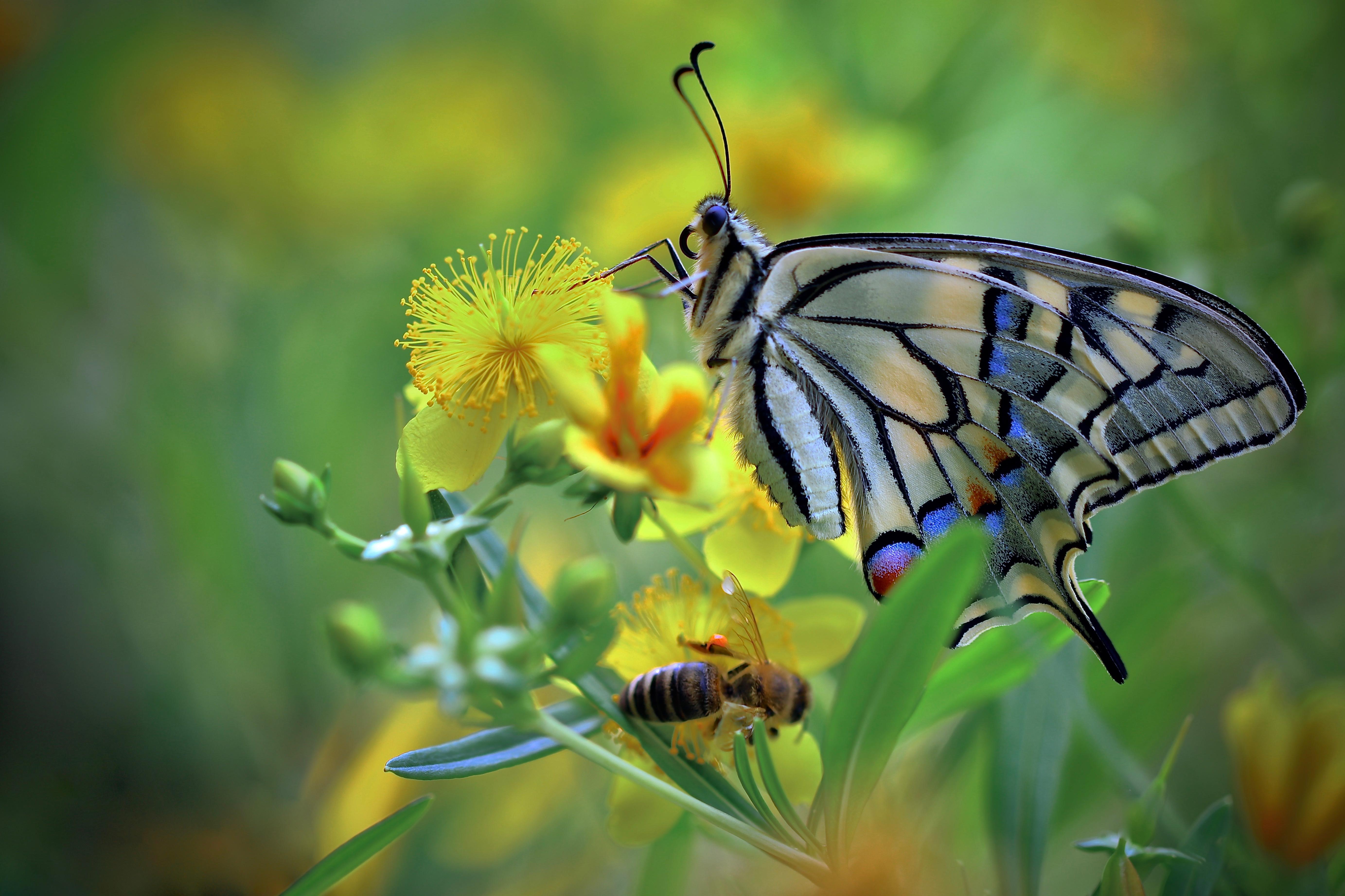 蝴蝶图片 4K高清壁纸 动物壁纸-第1张