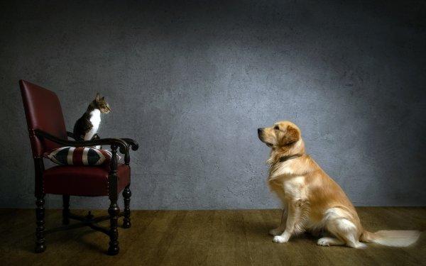 Animaux Chat Et Chien Chat Pet Chien Chair Golden Retriever Fond d'écran HD | Arrière-Plan