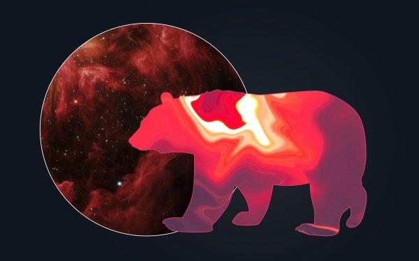 Animal Bear Bears Space HD Wallpaper | Background Image