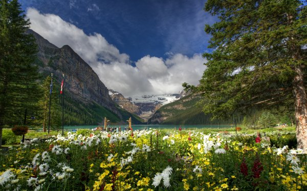 Earth Scenic Tree Flower Mountain Nature Lake Canada Banff National Park Lake Louise HD Wallpaper | Background Image