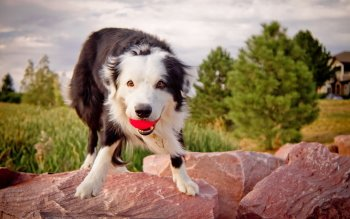 Animal - Dog Wallpapers and Backgrounds ID : 293572