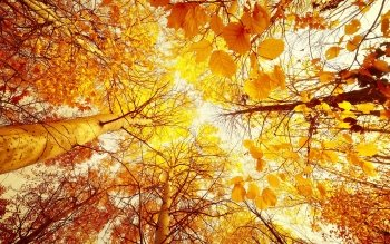 Earth - Autumn Wallpapers and Backgrounds ID : 294020