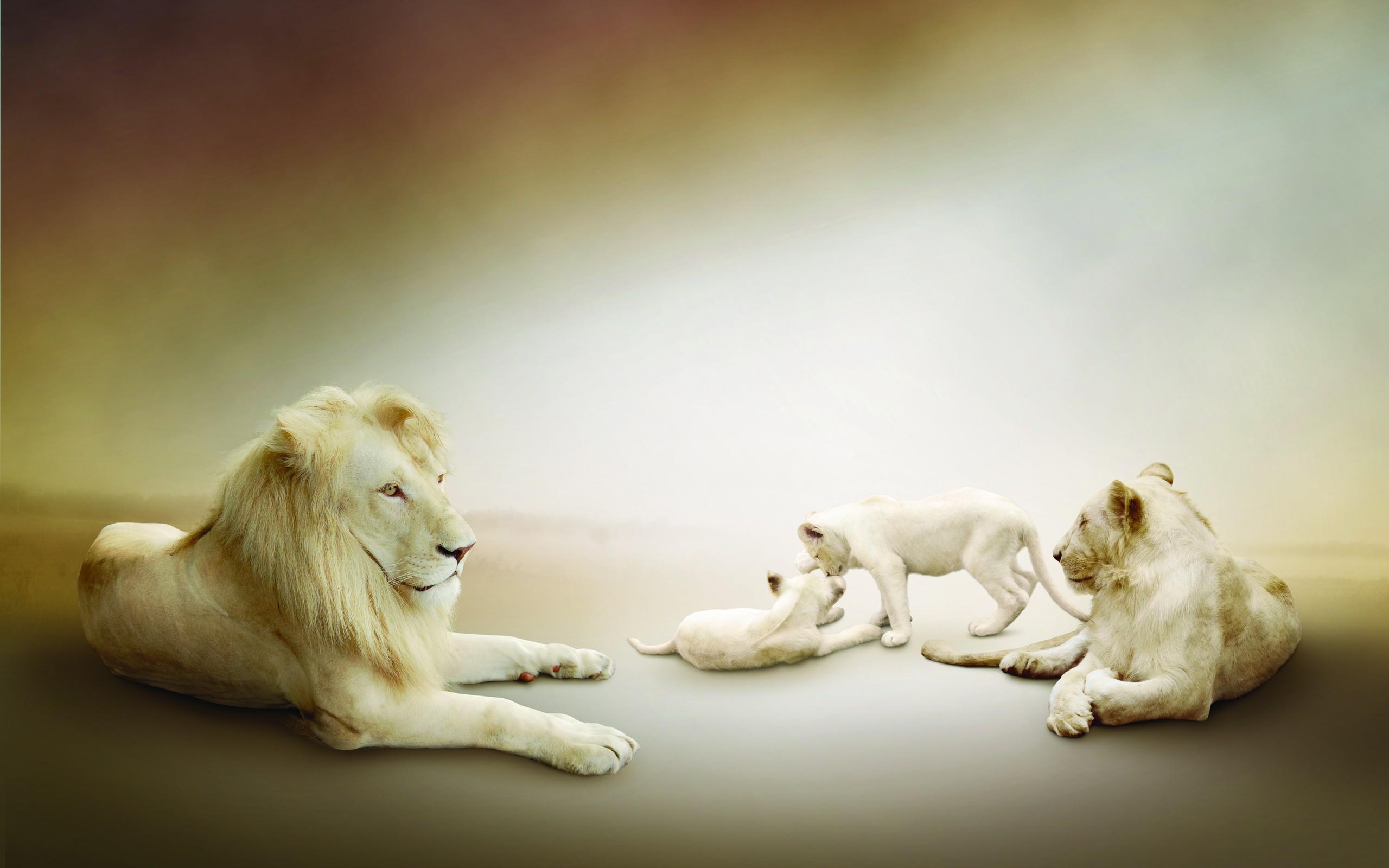 Hd wallpaper lion - Hd Wallpaper Background Id 299992 2560x1600 Animal White Lion