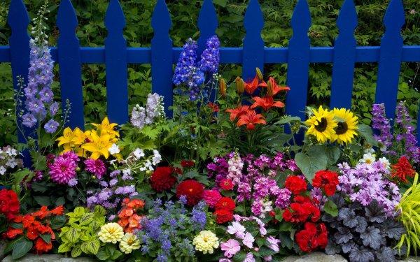 Tierra/Naturaleza Flor Flores Cerca Picket Fence Lirio Girasol Dahlia Zinnia Fondo de pantalla HD | Fondo de Escritorio