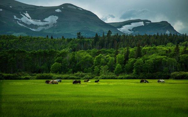 Animales Caballo Campo Hierba Verde Hill Paisaje Montaña Bosque Fondo de pantalla HD | Fondo de Escritorio