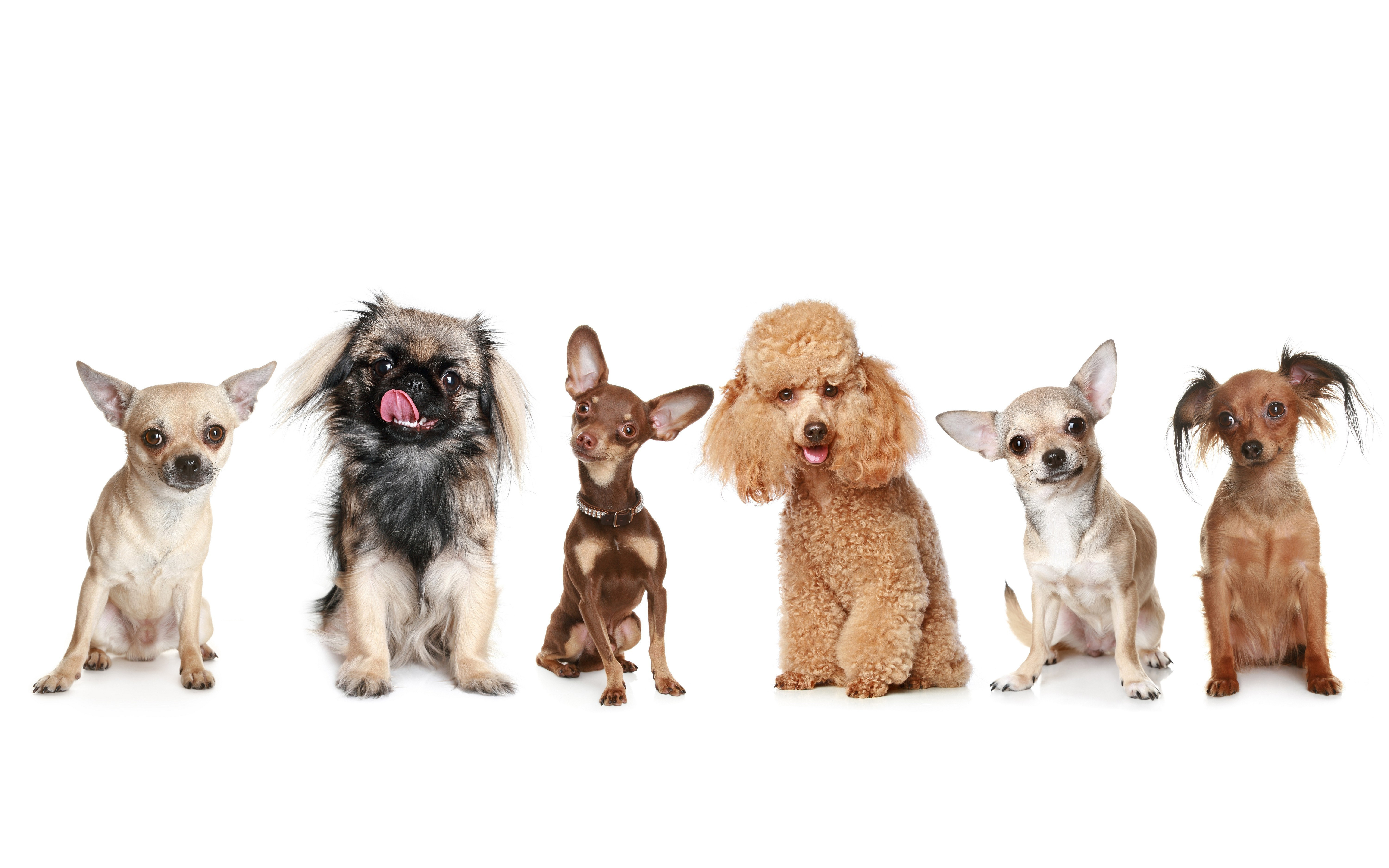dogs 5k retina ultra hd wallpaper and background | 6000x3750 | id