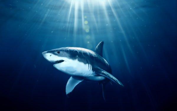 Animal Shark Sharks CGI 3D HD Wallpaper | Background Image