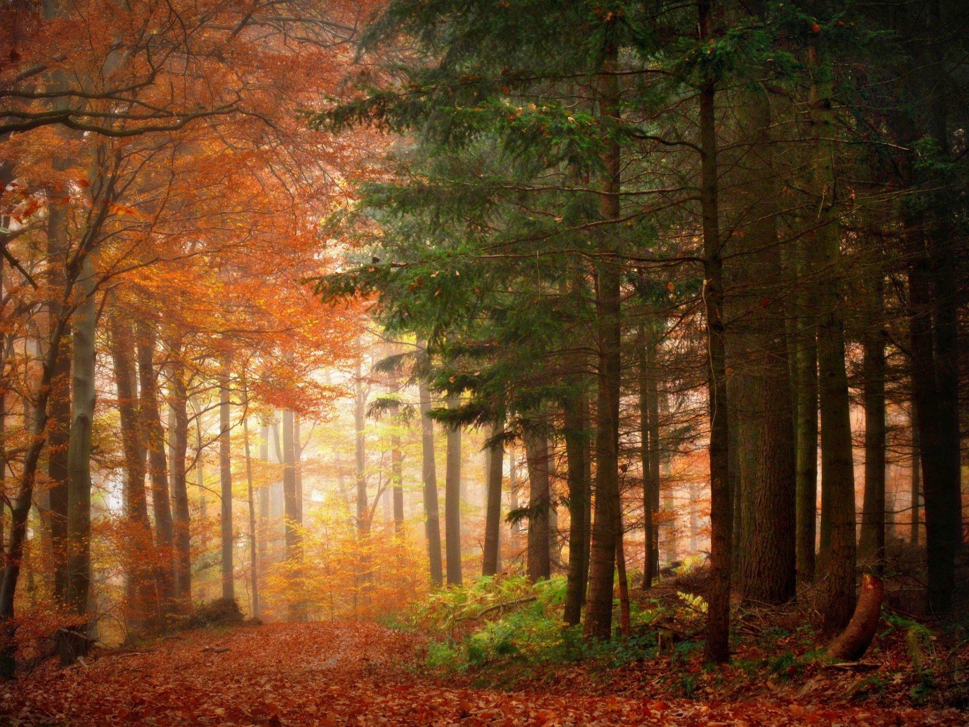 Earth - Fall  Forest Season Landscape Wallpaper