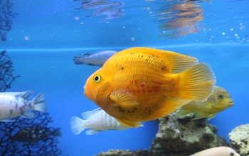 Animal - Fish Wallpapers and Backgrounds ID : 303750