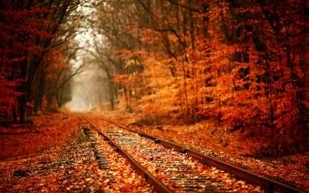Photography - Autumn Wallpapers and Backgrounds ID : 307295