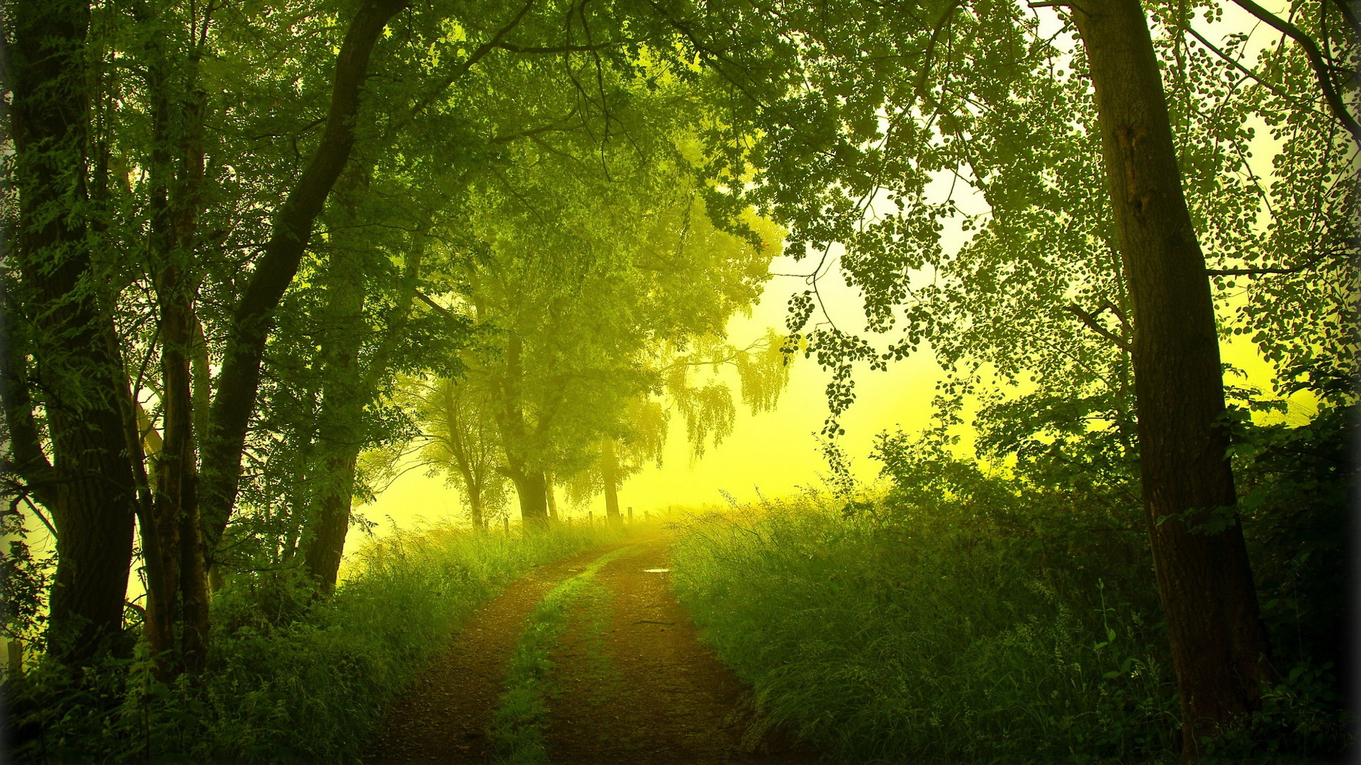 Earth - Forest  Landscape Path Pathway Road Fog Mist Tree Wallpaper