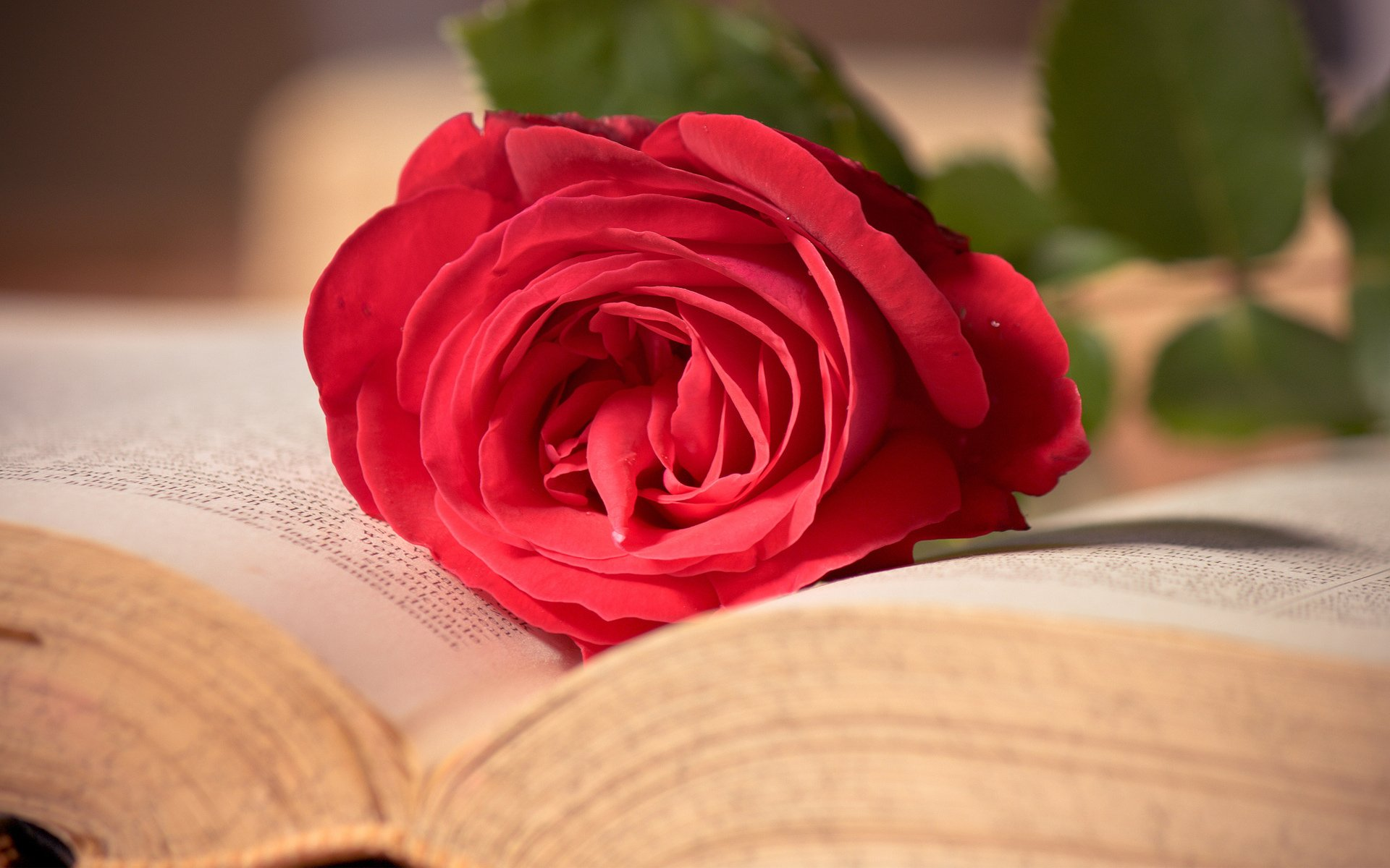 Man Made - Book Flower Rose Mood Love Romantic Wallpaper