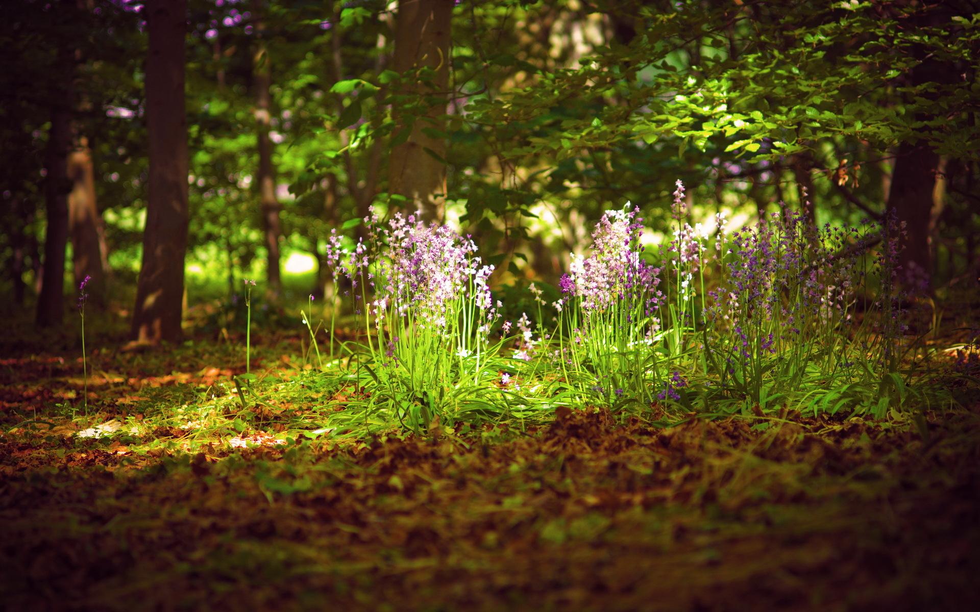 Earth - Forest  Flower Nature Landscape Summer Spring Wallpaper
