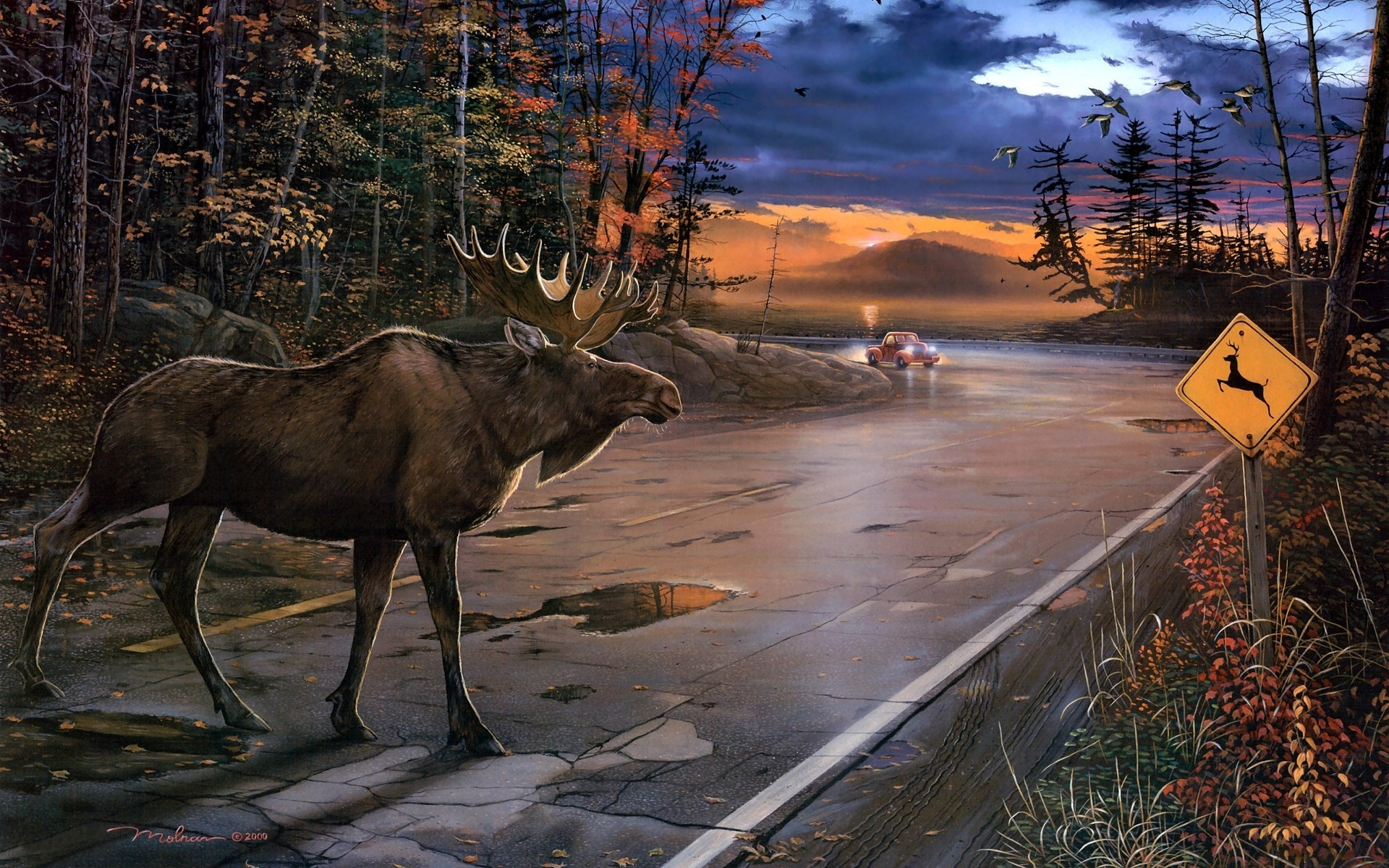 moose fall desktop wallpaper - photo #18