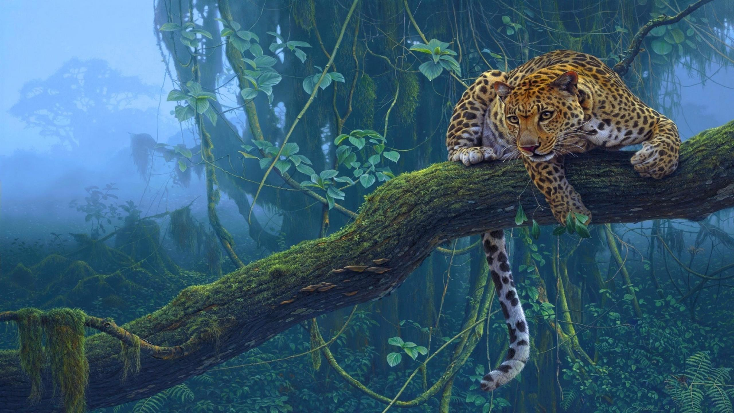 Leopard Full Hd Wallpaper And Background Image 2560x1440