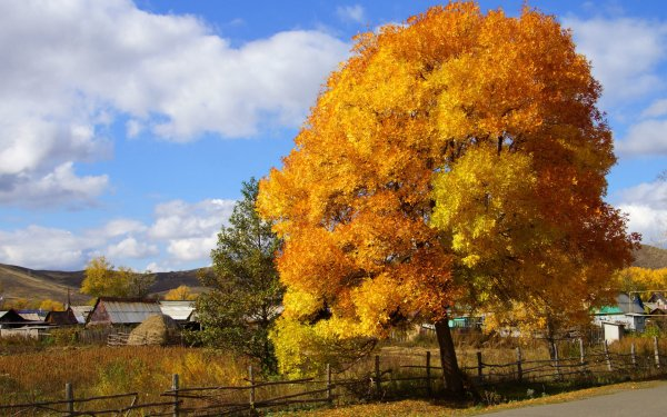 Fotografía Otoño Season Naturaleza Hoja Granja Fondo de pantalla HD | Fondo de Escritorio