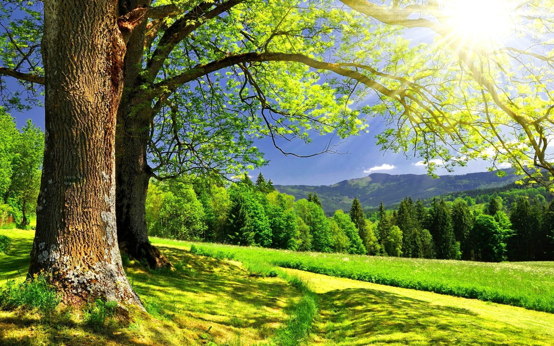 Earth - Spring  Summer Landscape Tree Forest Sun Sunbeam Sunlight Wallpaper