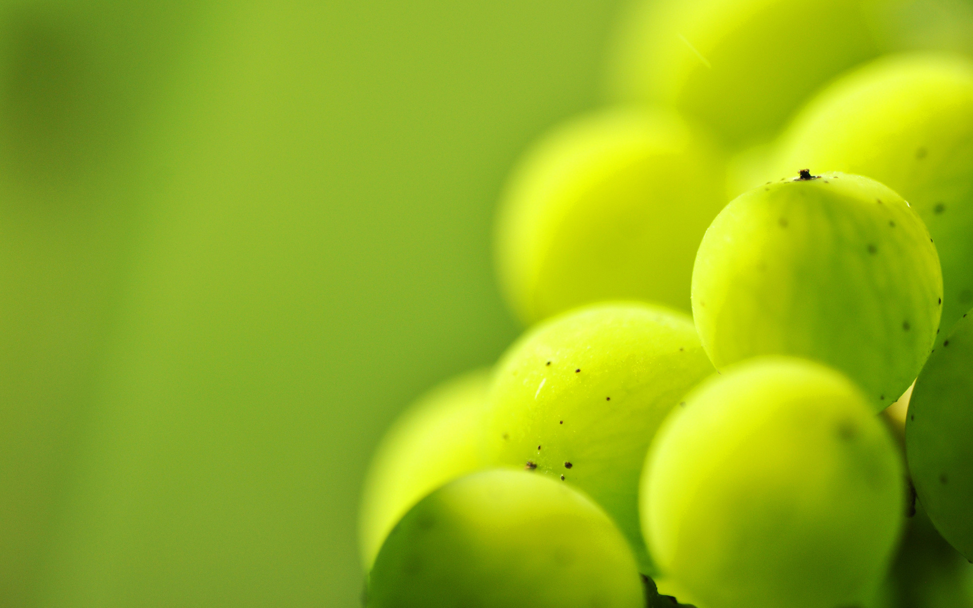 Grapes Full HD Wallpaper and Background | 1920x1200 | ID ...