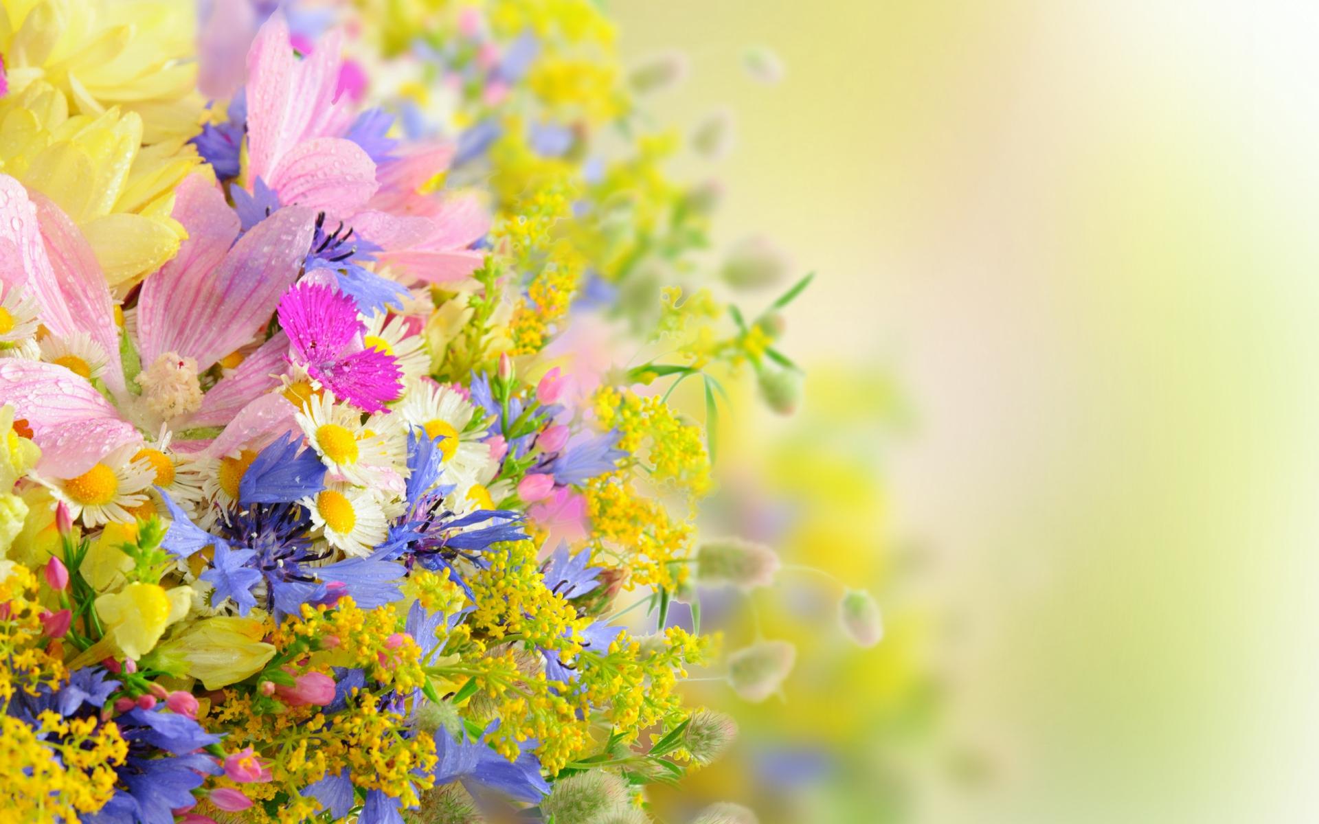 Flower Hd Wallpaper Background Image 1920x1200 Id 313731