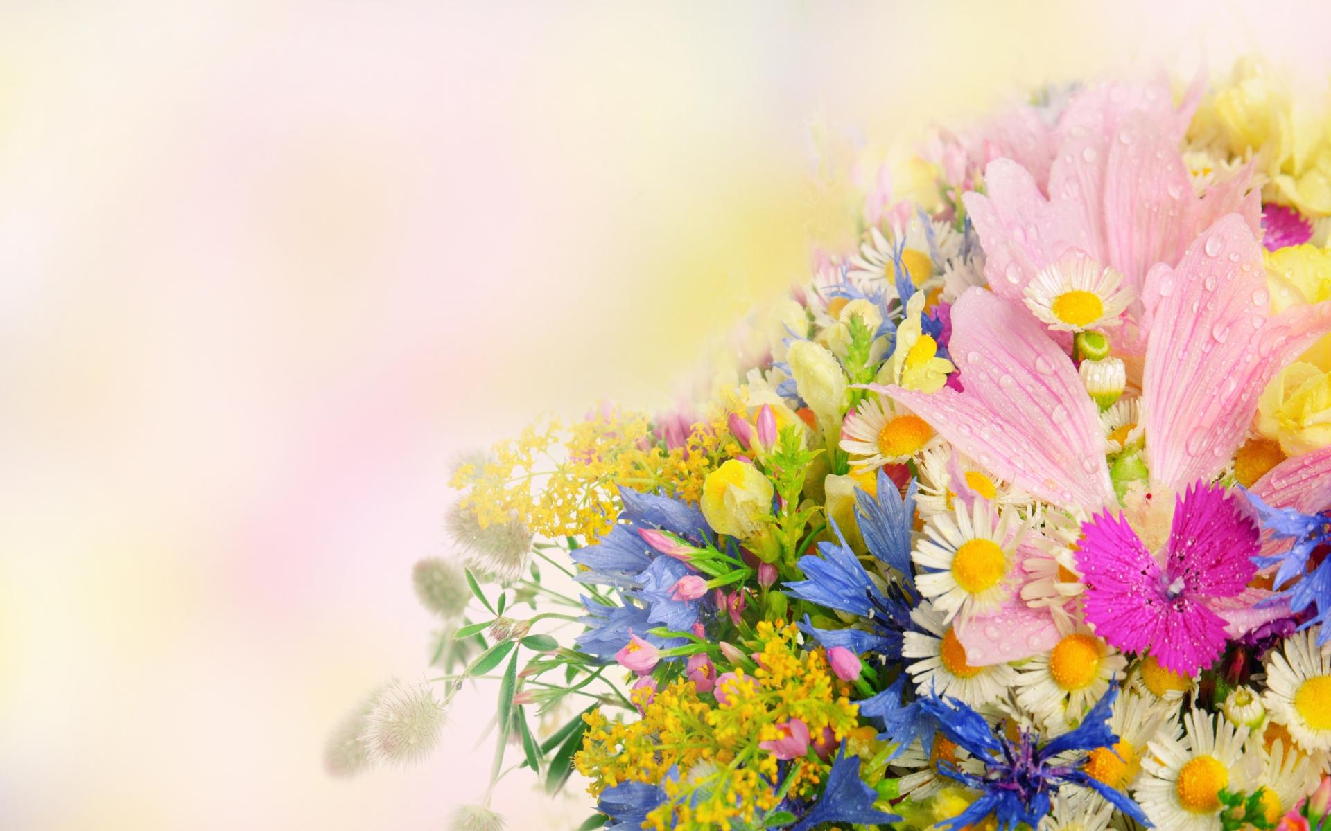 широкоформатные обои цветы полевые