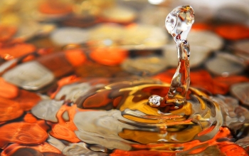 Photography - Water Drop Wallpapers and Backgrounds ID : 313938
