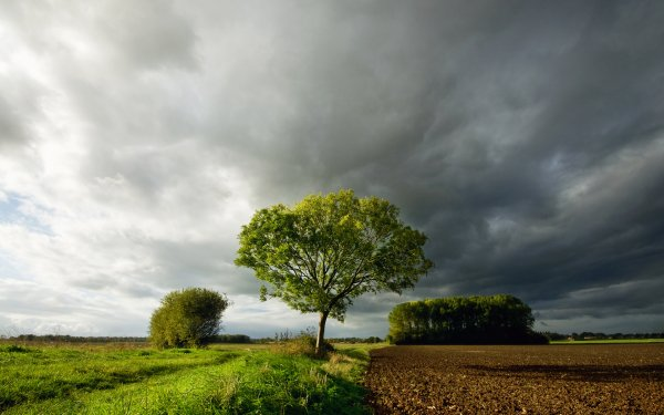 Tierra/Naturaleza Paisaje Pintoresco Cielo Nube Granja Árbol Fondo de pantalla HD | Fondo de Escritorio