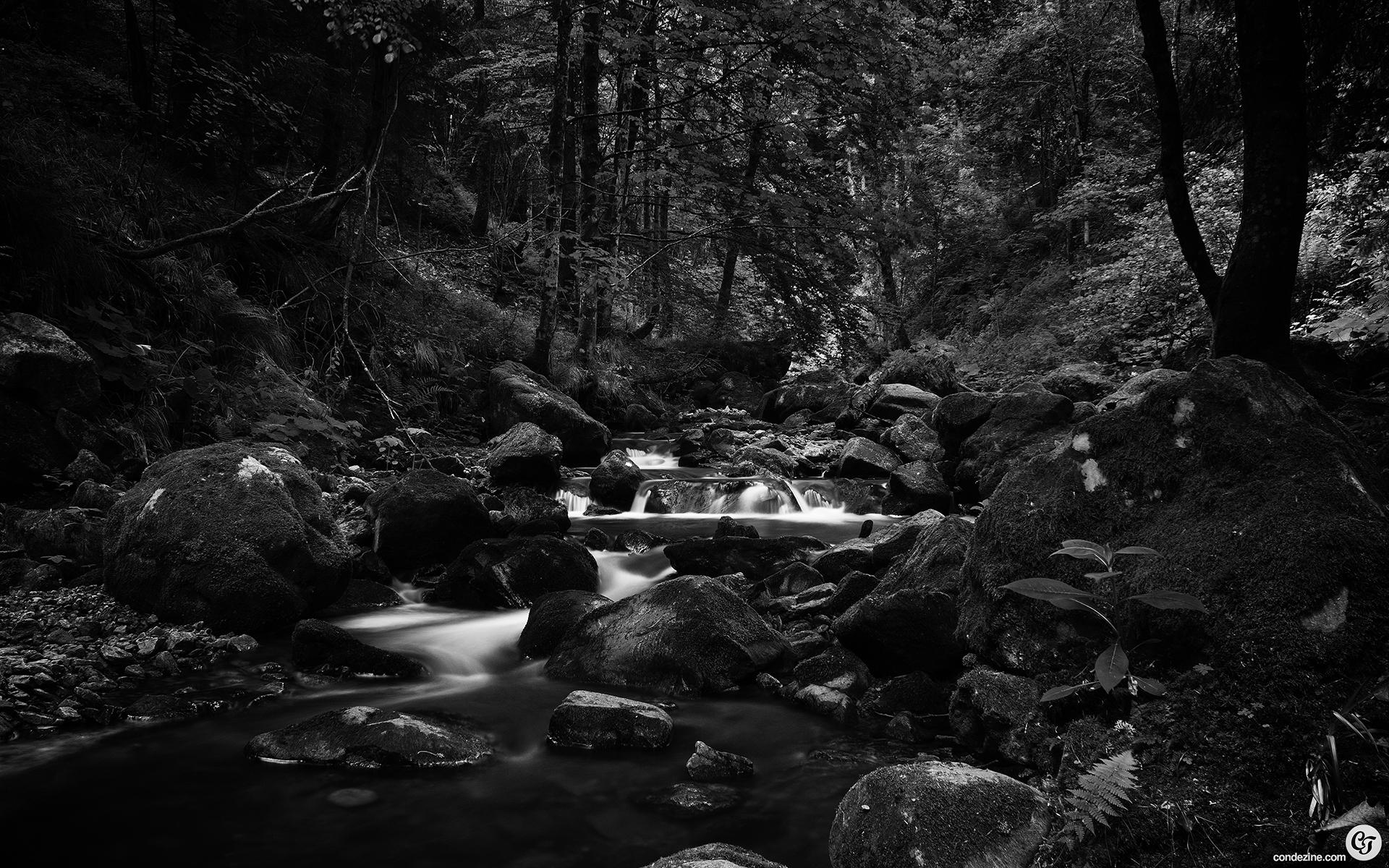 http://www.behance.net/gallery/Black-Forest-Greyscale ...