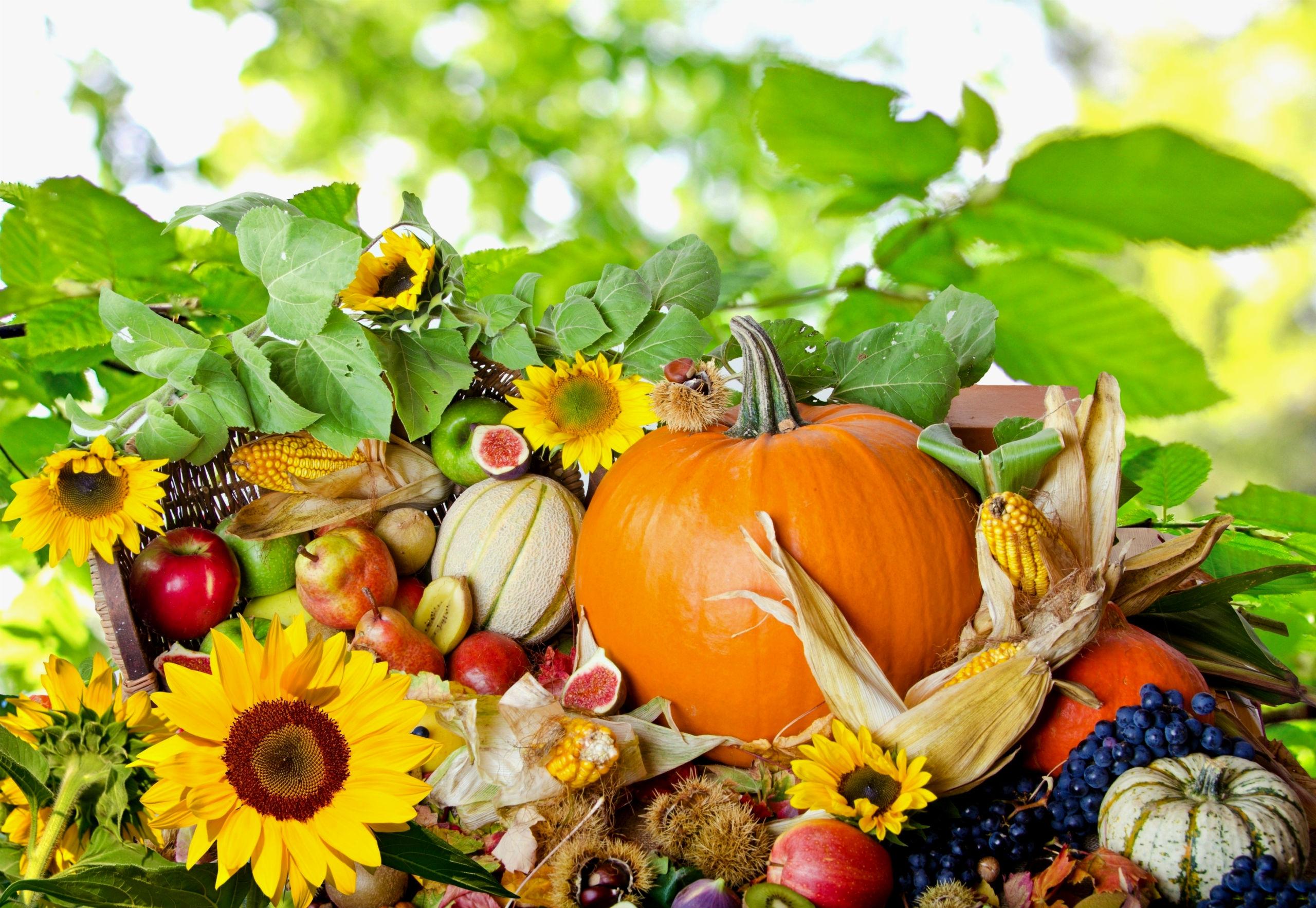 Holiday - Thanksgiving  Fall Season Nature Leaf Flower Wallpaper