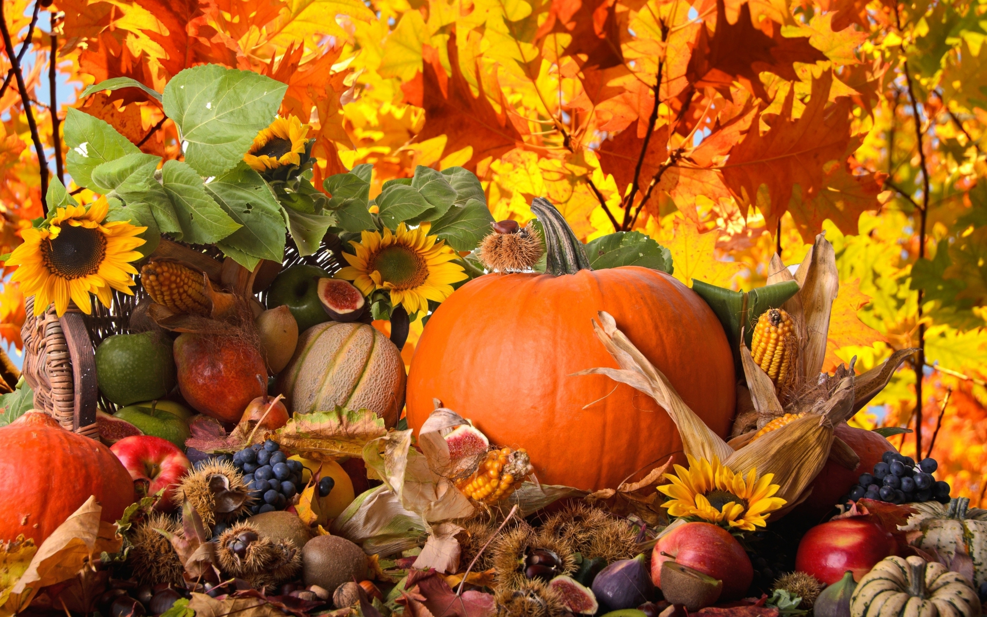 Holiday - Thanksgiving  - Fall - Season - Seasons - Nature - Autumn - Leaf - Leaves - Flowers Wallpaper