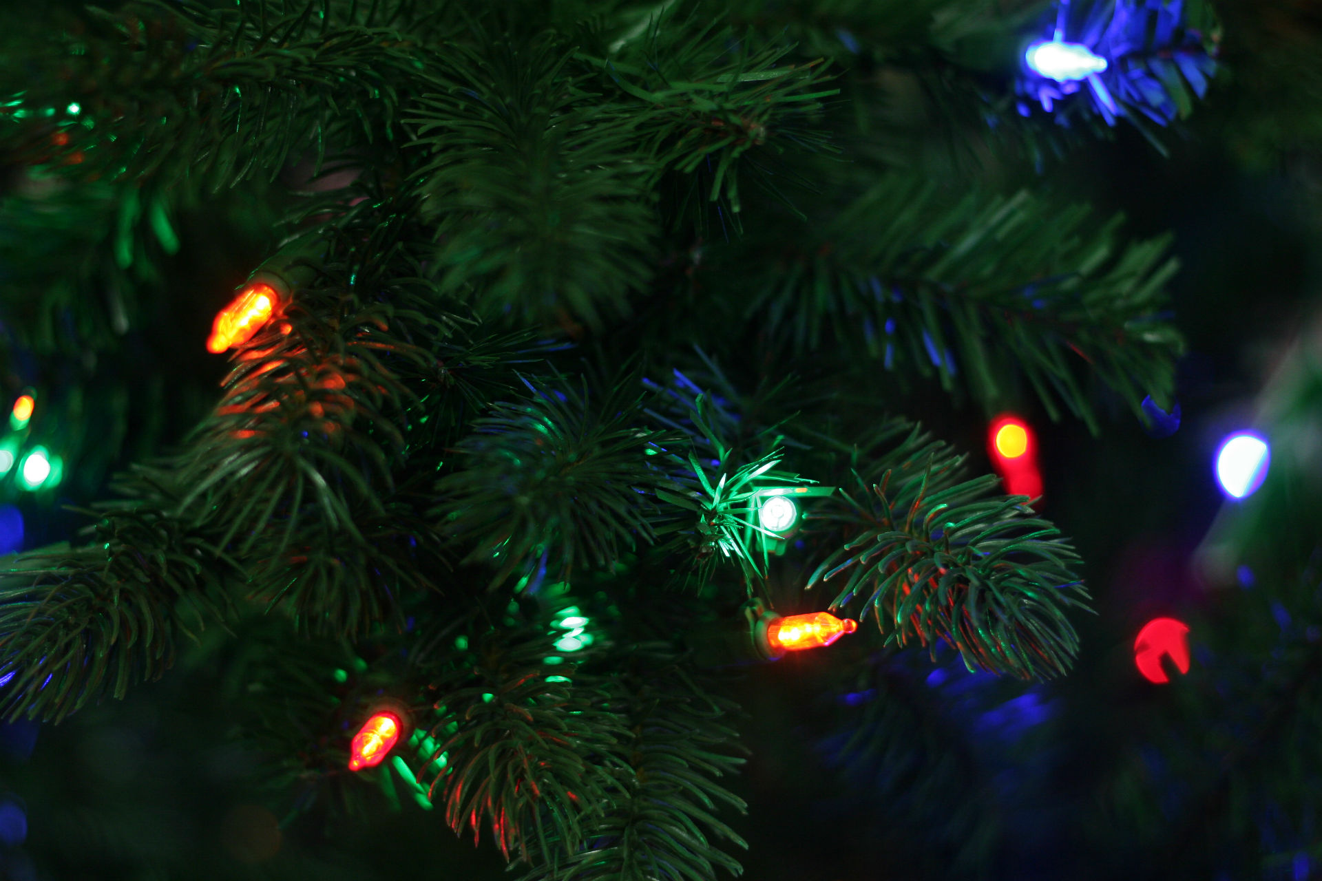 Blue Christmas Tree Forum Avatar: Christmas HD Wallpaper
