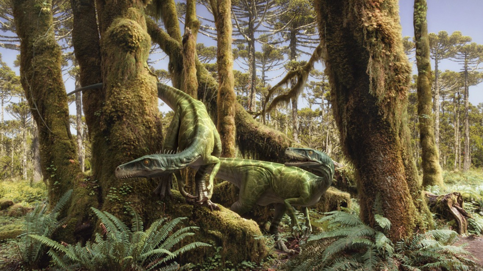 Image Result For Tapete Dinosaurier
