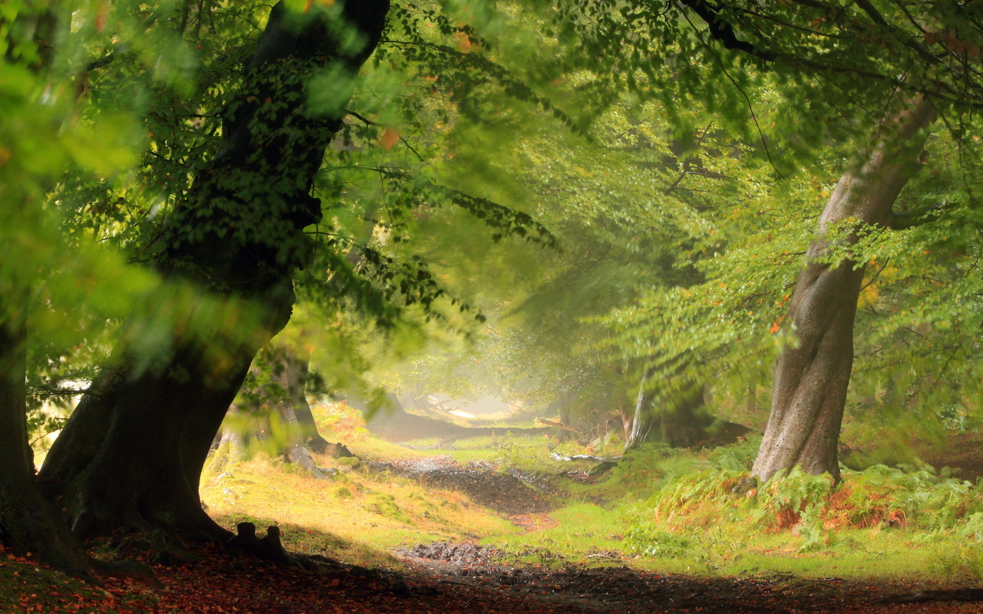 Earth - Forest  Landscape Scenic Wallpaper