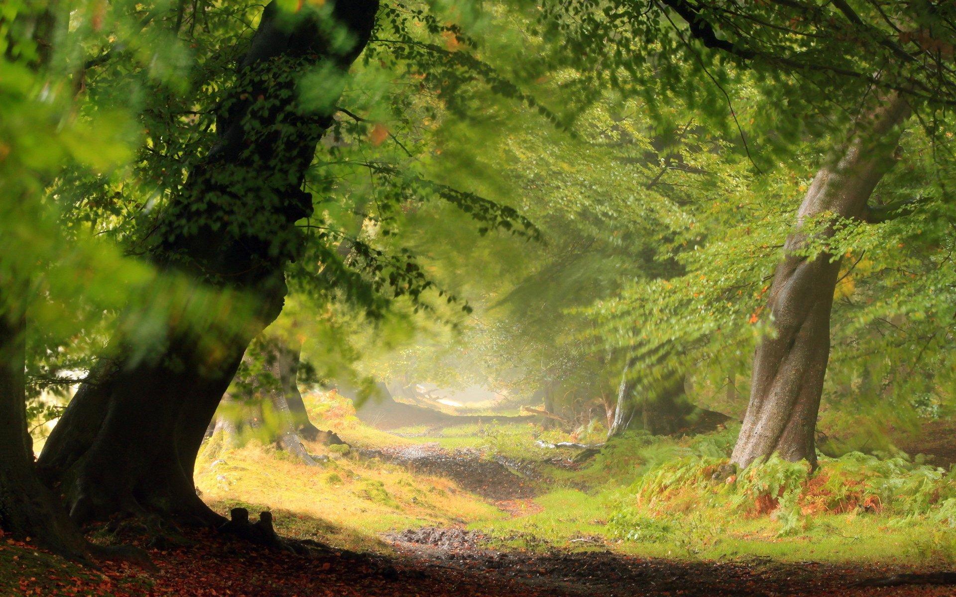 Earth - Forest  Landscape Scenic Wallpaper
