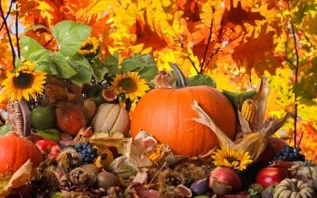 Holiday - Thanksgiving Wallpapers and Backgrounds ID : 314211