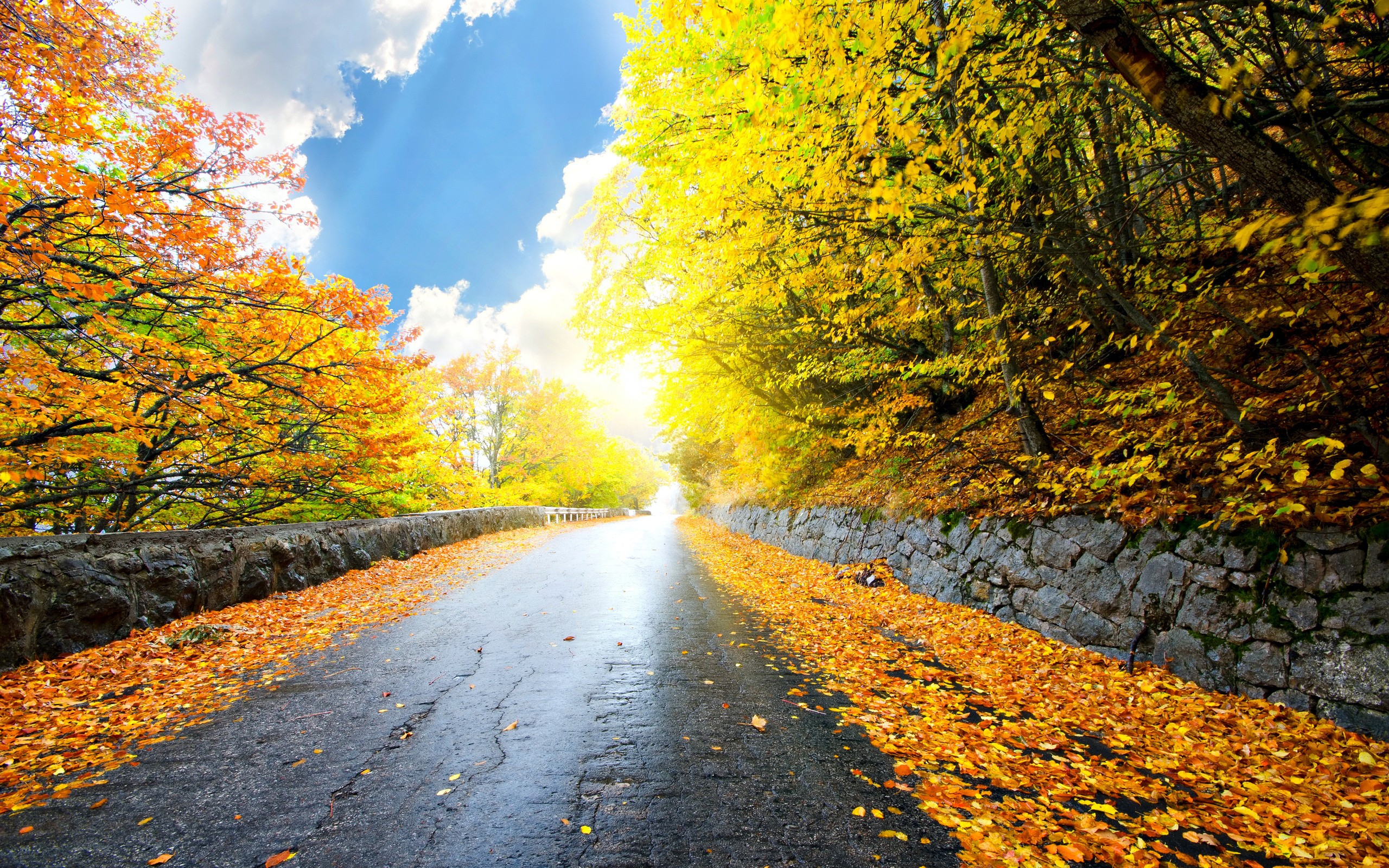 Autumn Road Full HD Wallpaper And Background Image