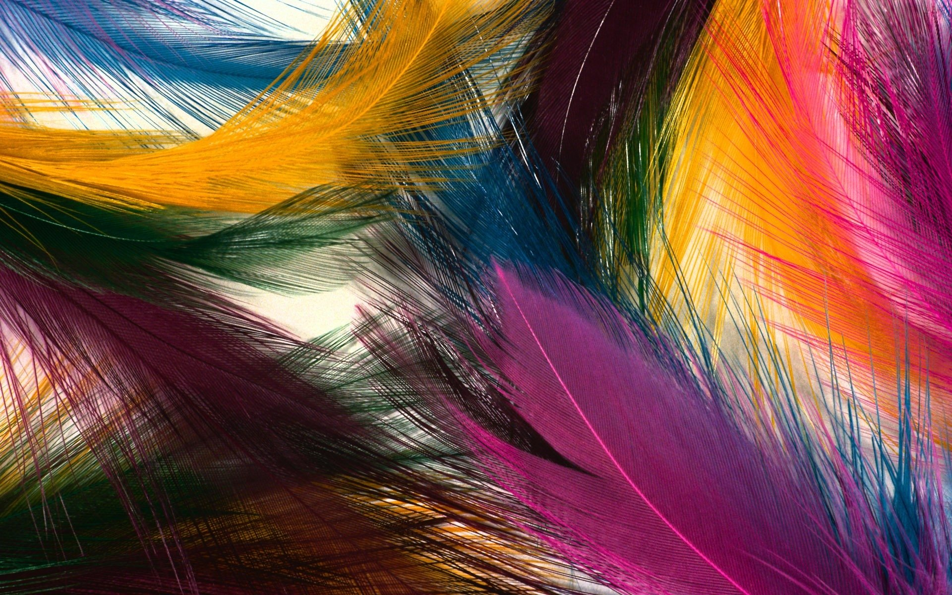 81 feather hd wallpapers | background images - wallpaper abyss