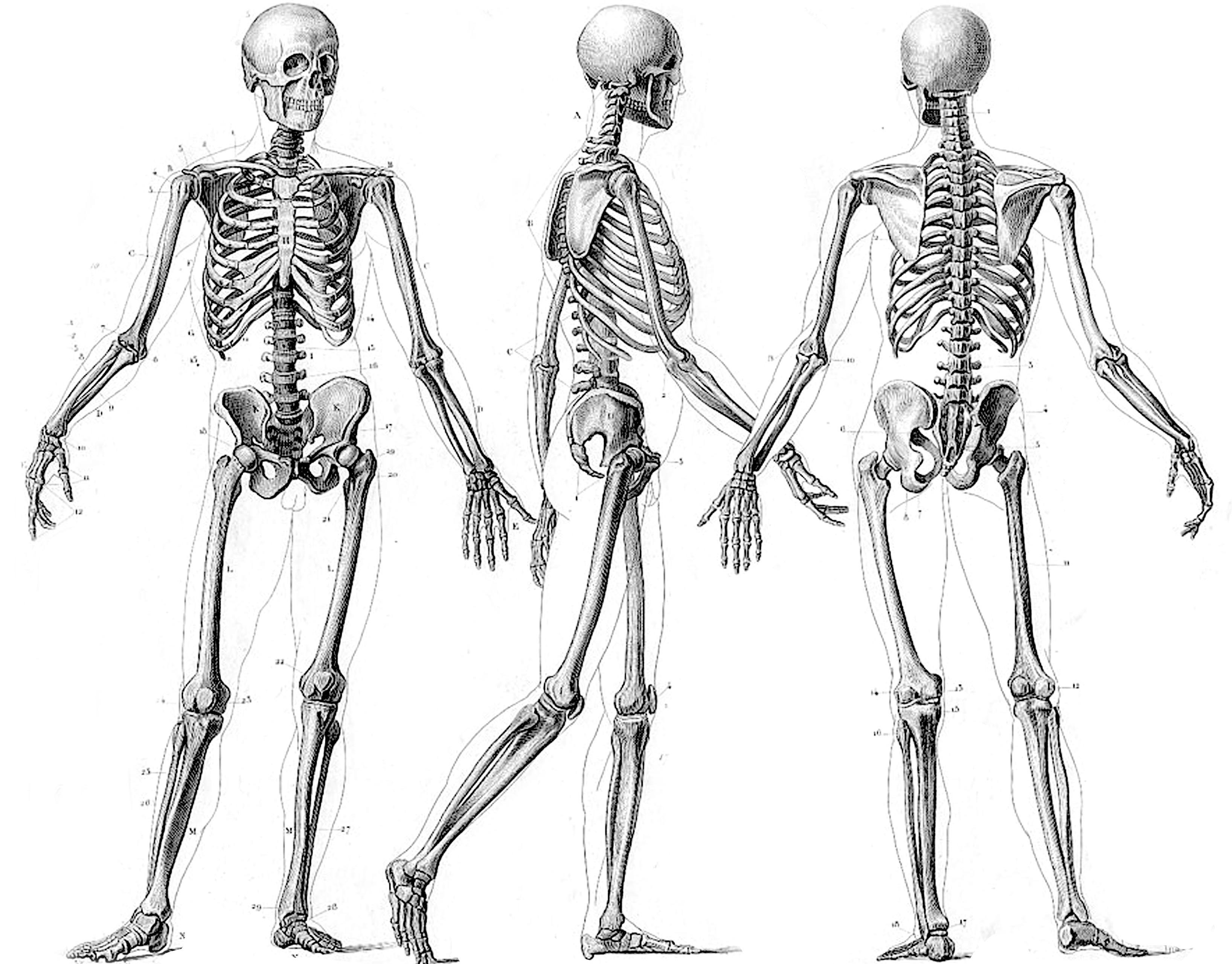 130 squelette fonds d u0026 39  u00e9cran hd