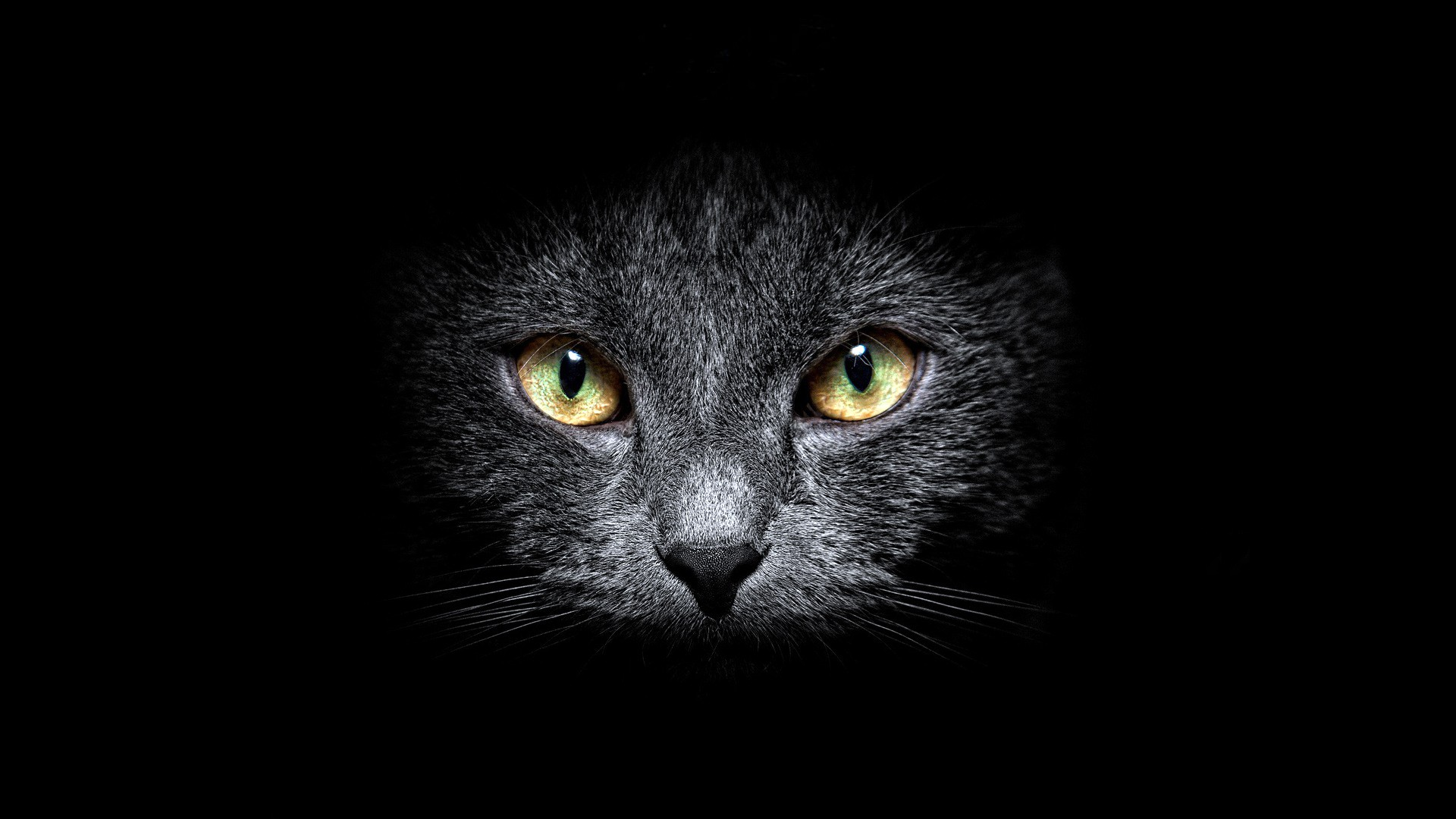 Black Cat Hd Wallpaper Background Image 1920x1080 Id 321290