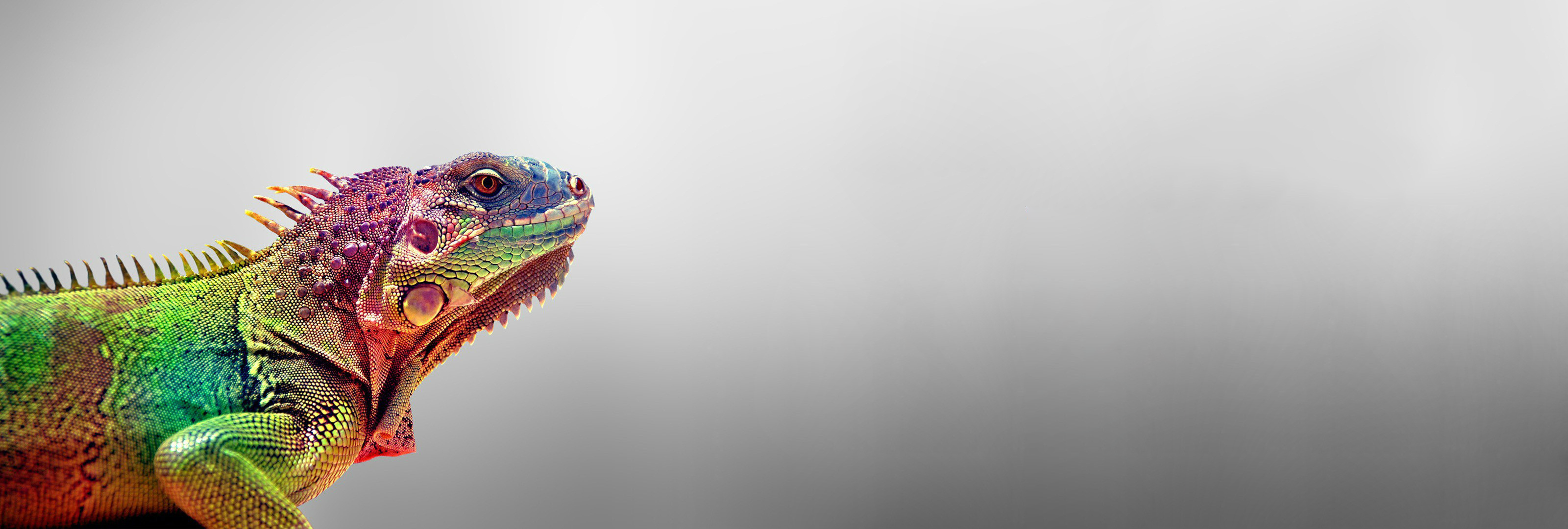 lizard full hd wallpaper and background image | 3200x1080 | id:321356