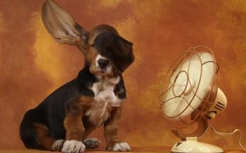 Animal - Basset Hound Wallpapers and Backgrounds ID : 323459